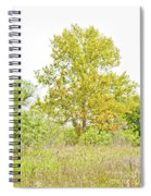 The Sycamore Spiral Notebook