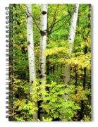 The Three Birch Spiral Notebook