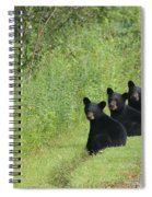 The Three Little Abc Bears Spiral Notebook