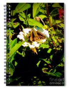 The Tiniest Skipper Butterfly In The Garden Spiral Notebook