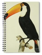 The Toco Toco Toucan  Ramphastos Toco Spiral Notebook