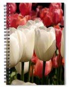 The Tulip Bloom Spiral Notebook