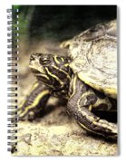 The Turtle Spiral Notebook