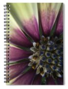 The Twin Spiral Notebook