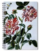 The Variegated Rose Of England Spiral Notebook