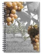 The Vineyard 2  Spiral Notebook