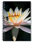 The Water Lily And The Dragonfly Spiral Notebook