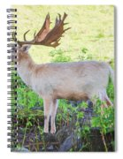 The White Stag 2 Spiral Notebook