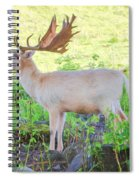 The White Stag 3 Spiral Notebook