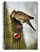 The White Winged Dove  Spiral Notebook