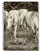 The Wild Horses Of Shannon County Mo 7r2_dsc1111_16-09-23 Spiral Notebook