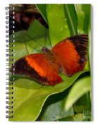 The Wizard Butterfly Spiral Notebook