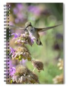 The Wonder Of Wings  Spiral Notebook