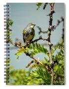 The  Yellow-rumped Warbler Spiral Notebook