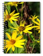Thin-leaved Sunflower Spiral Notebook