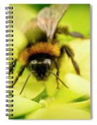 Thirsty Bumble Bee. Spiral Notebook