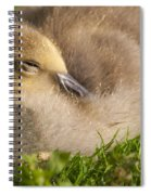 This Little Guy Needs A Nap Spiral Notebook