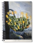 Thornton: Aloe Spiral Notebook