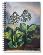 Thornton: Auriculas Spiral Notebook