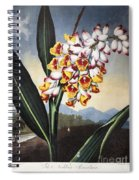 Thornton: Shell Ginger Spiral Notebook