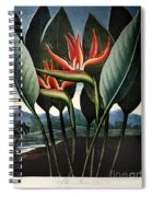 Thornton: Strelitzia Spiral Notebook