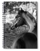 Thoroughbred - Black And White Spiral Notebook