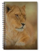 Thoughtful Lioness - Horizontal Spiral Notebook