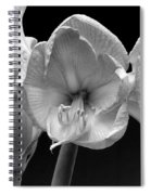 Three Amaryllis  Black And White Print Spiral Notebook