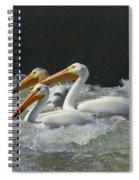 Three American Pelicans Spiral Notebook