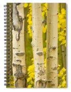 Three Autumn Aspens Spiral Notebook