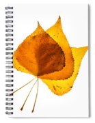 Three Backlit Cottonwood Leaves In Autumn On White Spiral Notebook