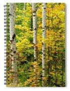 Three Birch Spiral Notebook