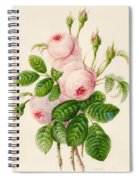 Three Centifolia Roses With Buds Spiral Notebook