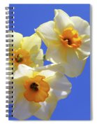 Three Daffodils Spiral Notebook