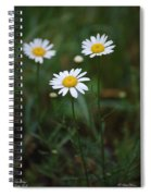 Three Daisy's Spiral Notebook