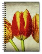 Three Dew Covered Tulips Spiral Notebook