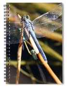 Three Dragonflies On One Reed Spiral Notebook