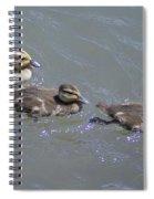 Three Duckies  Spiral Notebook
