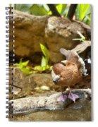 Three Ducks Spiral Notebook
