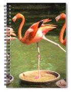 Three Flamingos Spiral Notebook