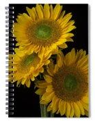 Three Golden Sunflowers Spiral Notebook