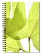Three Green Leaves Spiral Notebook