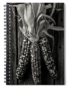 Three Indian Corn In Black And White Spiral Notebook