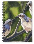 Three Jays Spiral Notebook