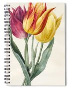 Three Lily Tulips  Spiral Notebook