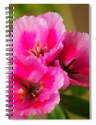 Three Little Beauties Spiral Notebook