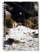 Three Mourning Doves Spiral Notebook