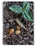 Three Nuts For A Trillium Spiral Notebook
