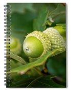 Three Oak Acorns Spiral Notebook