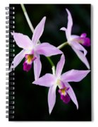 Three Orchids Spiral Notebook
